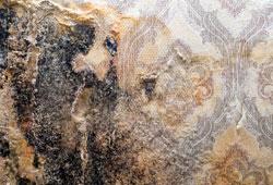 moldy wallpaper